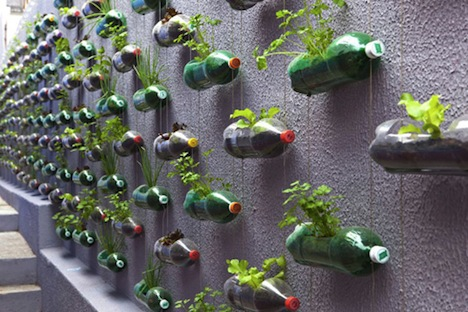 plantar em garrafa pet