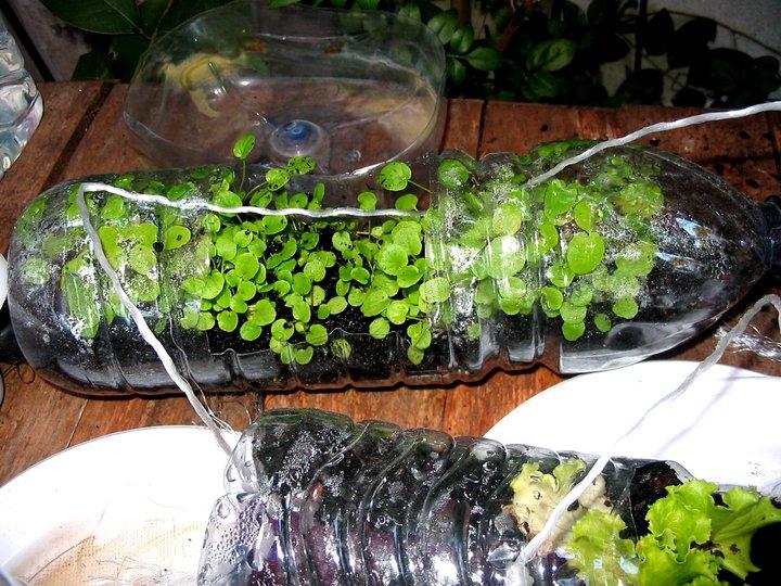 plantar em garrafa pet8