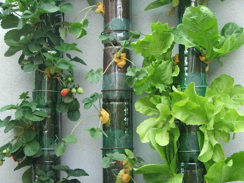 plantar em garrafa pet5