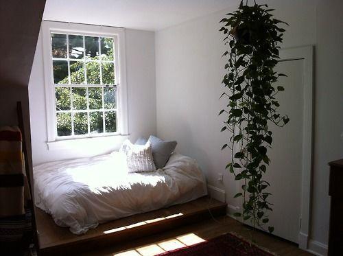 Planta Jiboia - Pinterest