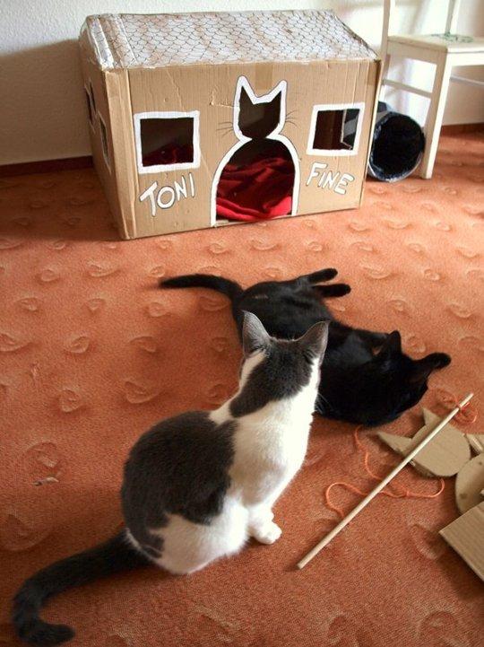 casinha-dupla-para-gatinhos